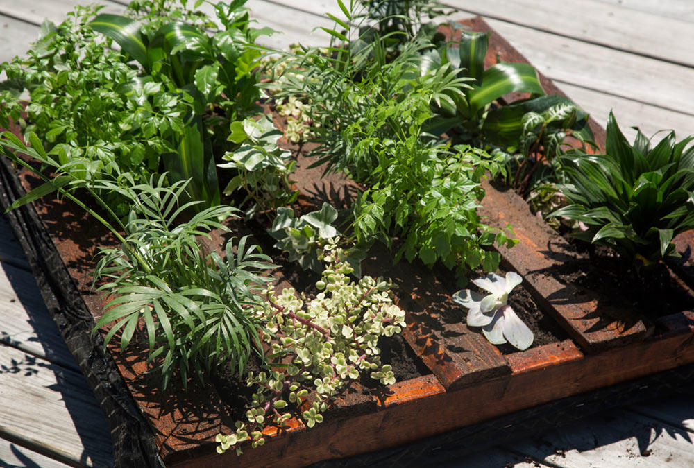Plant Wall Watering - LiveAbode