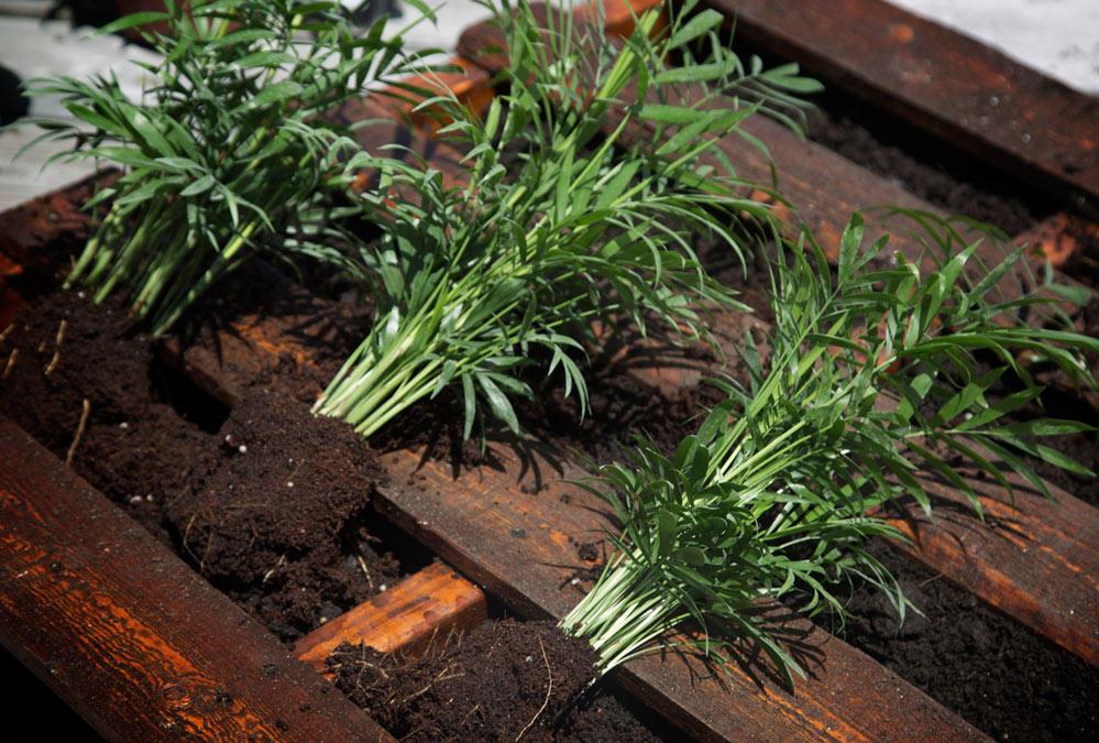 Plants - LiveAbode
