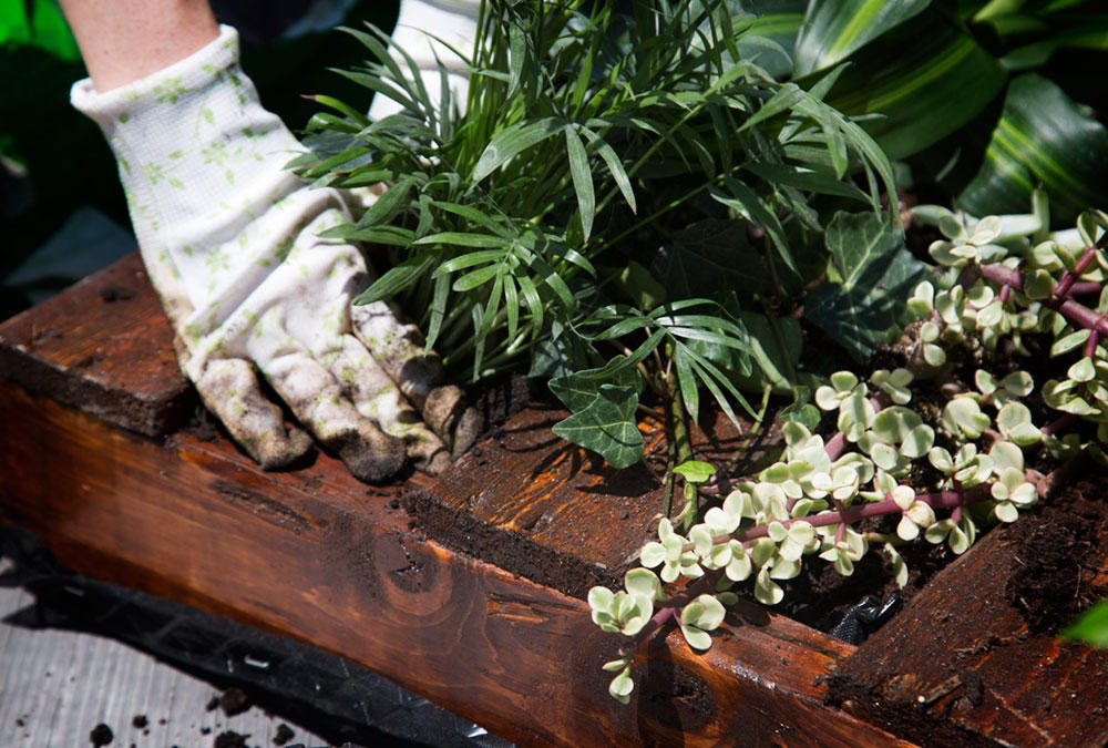 Potting Soil with Plants - LiveAbode