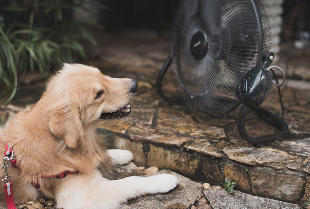 dog in front of a fan