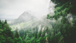 Misty mountains and green trees